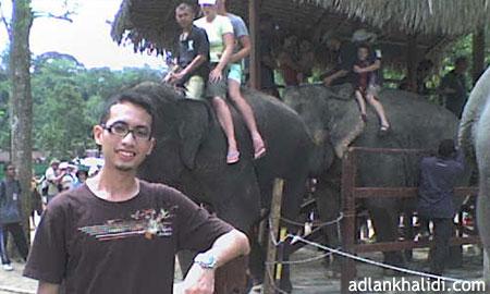 gajah-kuala-gandah-pahang3.jpg