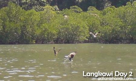 langkawi-day2-eagle-feeding